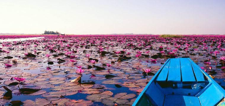 Red Lotus Lake Thailand