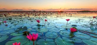 Red Lotus Lake Thailand