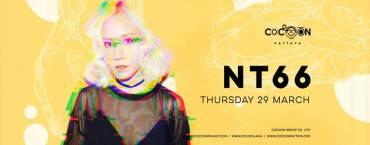 NT66 Live at Cocoon Pattaya